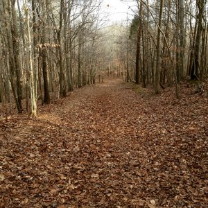 A path through woods covered with fallen leaves.