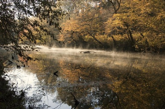 Mist rises from the Eno River as the sun shines through near the top of the trees on the bank of the riverbed.