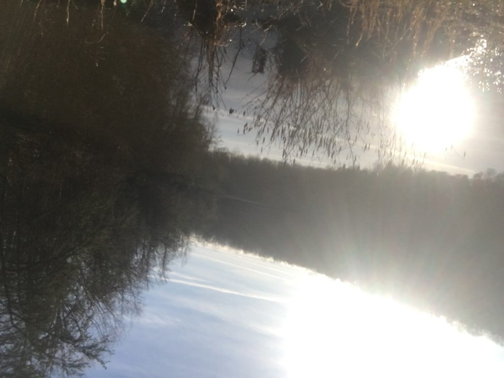 A picture of lots of different trees behind a lake with the sun brightly shining through